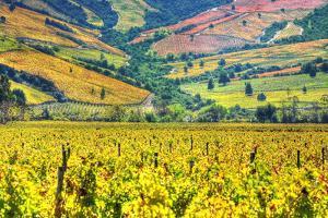 Vineyards (Hdr) - Valle Colchagua by Fotografías Jorge León Cabello