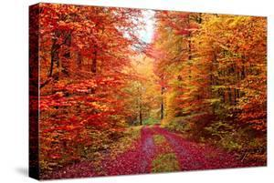 Magnificent Autumn Colors Forest in October by Fotozickie