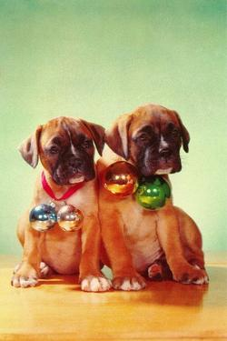 Boxer Puppies with Christmas Bulb Collars by Found Image Press