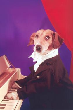 Dog Playing Piano by Found Image Press