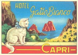 Hotel Gatto Bianco Capri by Found Image Press