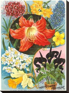 Mayflower Seed Packet by Found Image Press