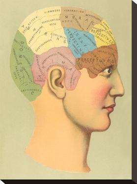 Phrenology Chart by Found Image Press