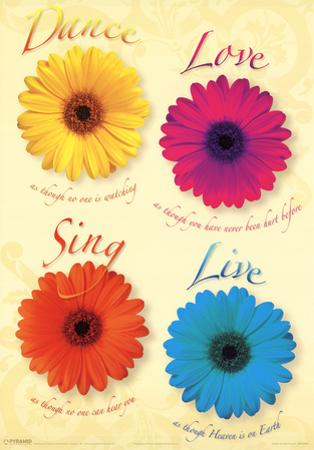 Four Daisies Dance Sing Love Live Art Print Poster