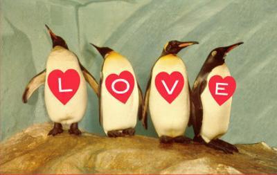 Four Emperor Penguins, LOVE