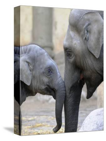 Four Month Old Elephant and Her Mother are Pictured in Hagenbeck's Zoo in Hamburg, Northern Germany