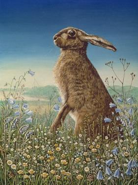 Hare, 1984 by Frances Broomfield
