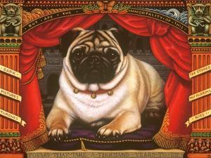 Nabokov's Pug, 2006 by Frances Broomfield