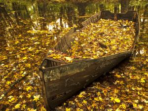 An Old Worn Rowboat Filled with Autumn Leaves in a New England Stream by Frances Gallogly