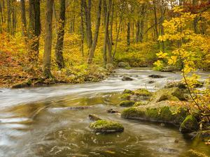 Babbling New England Brook over a Rocky Stream Bed Amongst Colorful Fall Foliage by Frances Gallogly