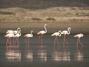Flamingos by Frances Gallogly