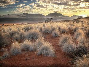 Morning Light over Desert Dunes, Mountains and Sun-Lit Grasses in the Namibrand, Namibia, Sw Africa by Frances Gallogly