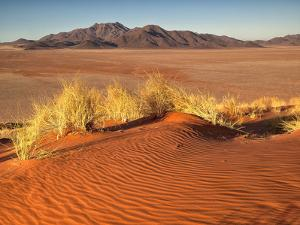 Red Colored Sand Dunes and Golden Grasses in the Namibrand Desert, Namibia by Frances Gallogly