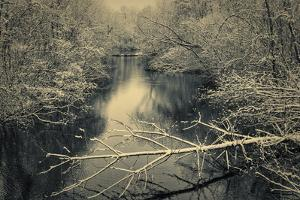 Snow Clings to the Branches of Trees Overhanging a River in Winter's Grip in a New England Woodland by Frances Gallogly
