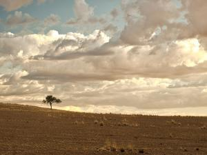 Solitary Tree in the Namib Desert on a Cloudy Day in Namibia by Frances Gallogly