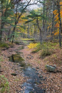 Tranquil Stream Meandering Through a New England Woods in Autumn by Frances Gallogly