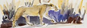 Lioness sketch, 2014 by Francesca Sanders