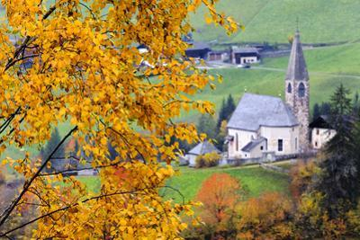 Tree with yellow leaves with the church of Santa Magdalena in the background, Funes Valley, Sudtiro by Francesco Bergamaschi