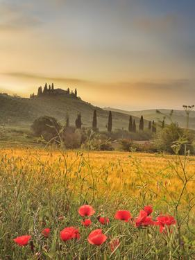 Italy, Tuscany, Siena District, Orcia Valley, Podere Belvedere Near San Quirico D'Orcia by Francesco Iacobelli