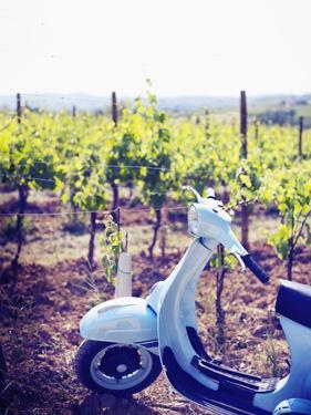 Italy, Umbria, Perugia District, Montefalco, Vespa Scooter in Vineyard by Francesco Iacobelli