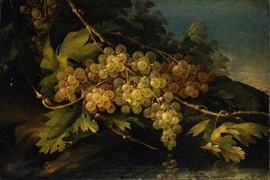 Still Life (Bunch of Yellow Grapes) by Francesco Malagoli