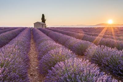 Provence, Valensole Plateau