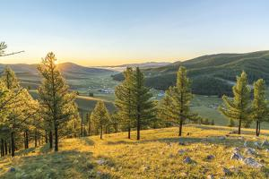Fir trees in the morning light above Tsenkher Hot Springs, North Hangay province, Mongolia, Central by Francesco Vaninetti