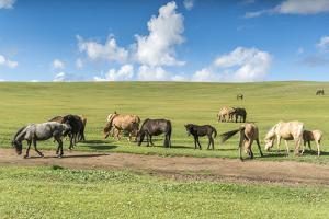 Horses grazing on the Mongolian steppe, South Hangay, Mongolia, Central Asia, Asia by Francesco Vaninetti