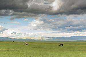 Horses grazing on the Mongolian steppe under a cloudy sky, South Hangay, Mongolia, Central Asia, As by Francesco Vaninetti