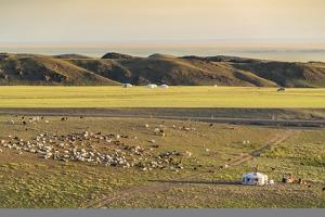 Nomadic camp and livestock, Bayandalai district, South Gobi province, Mongolia, Central Asia, Asia by Francesco Vaninetti
