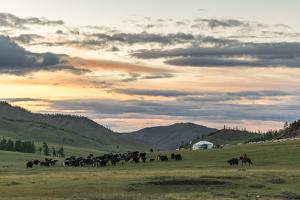 Shepherd on horse rounding up yaks at sunset, Burentogtokh district, Hovsgol province, Mongolia, Ce by Francesco Vaninetti