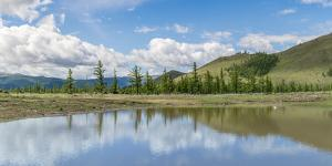 Water pond and fir trees in White Lake National Park, Tariat district, North Hangay province, Mongo by Francesco Vaninetti