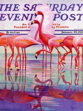 """Pink Flamingos,"" Saturday Evening Post Cover, January 29, 1938 by Francis Lee Jaques"