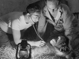 Orangutan Being Treated by Circus Veterinarian by Francis Miller