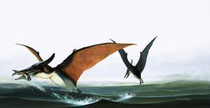 Pteranodon Catching a Fish by Francis Phillipps