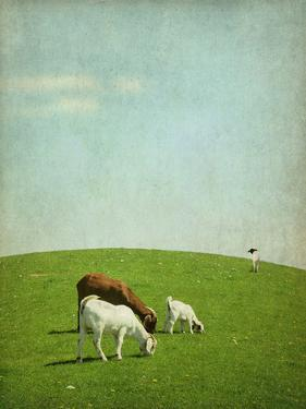 Goats on Hill by francois dion