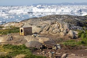 Huskies Near their Kennel, Ilulissat, Greenland by Françoise Gaujour