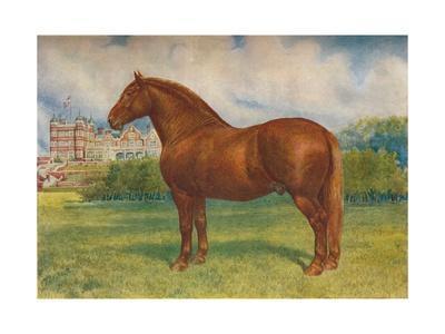 Suffolk sire Prince Wedgwood, c1902 (c1910)