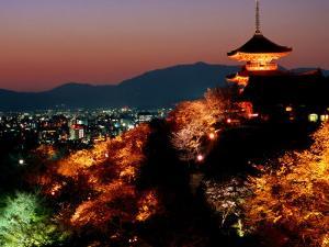 Main Hall, Sakura Trees and Pagoda Lit Up at Night at Kiyomizu-Dera Temple, Kyoto, Japan by Frank Carter