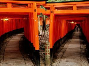 Torri Gates Lining Mountain Pathways at Fushimi-Inari, Kyoto, Japan by Frank Carter