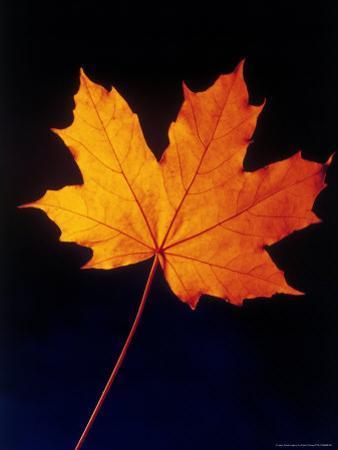 Autumn Leaf by Frank Chmura