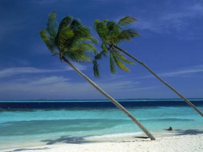 Palm Trees on Tropical Beach, Maldives by Frank Chmura