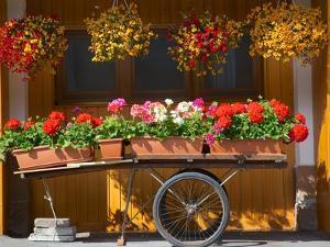 Flowers on Trolley, Arabba, Belluno Province, Trento, Italy, Europe by Frank Fell