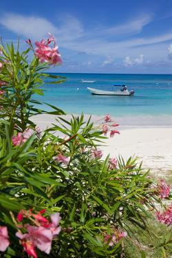 Long Bay and Beach, Antigua, Leeward Islands, West Indies, Caribbean, Central America by Frank Fell