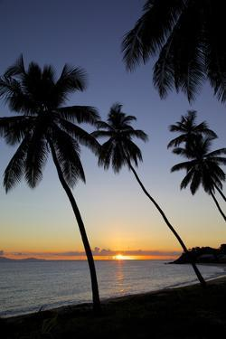 Palm Trees and Beach at Sunset by Frank Fell