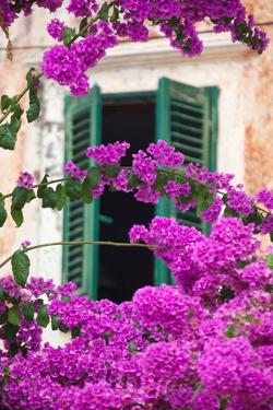 Shuttered Window and Blossom by Frank Fell