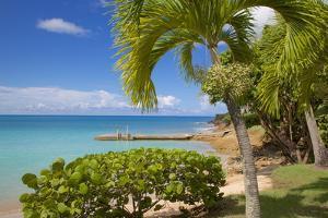 St. Johns, Antigua, Leeward Islands, West Indies, Caribbean, Central America by Frank Fell