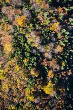 Autumn Wood, Aerial Shots, Bavaria, Germany by Frank Fleischmann