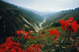 View of Flowers and Valley by Frank Johnston