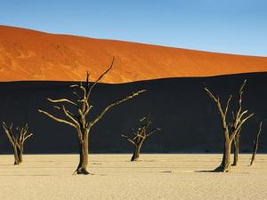 Bare trees at Dead Vlei by Frank Krahmer